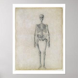 El esqueleto humano, visión anterior, desde la ser posters