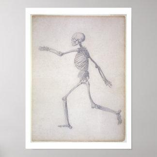 El esqueleto humano, visión lateral, desde la seri posters