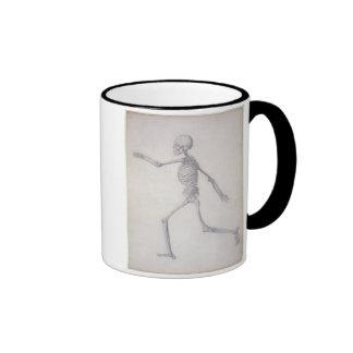 El esqueleto humano, visión lateral, desde la seri tazas de café