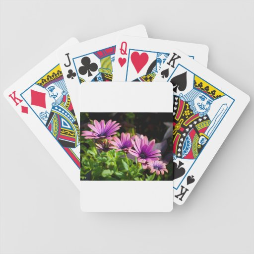 El estallar en margaritas de la púrpura de la prim cartas de juego