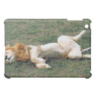 El estirar masculino del león