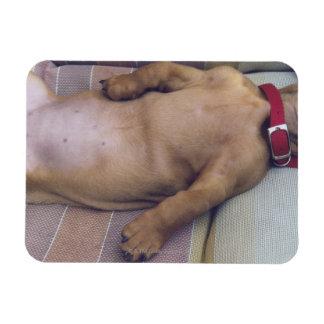El estómago del perro imán flexible