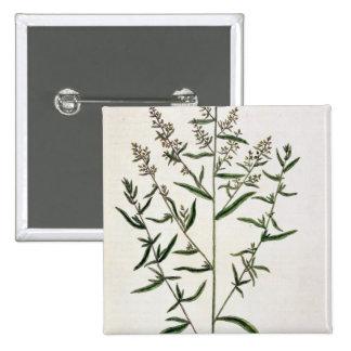 """El estragón, platea 116 """"de un herbario curioso"""",  pins"""