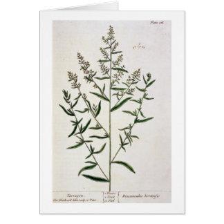 """El estragón, platea 116 """"de un herbario curioso"""",  tarjeta de felicitación"""