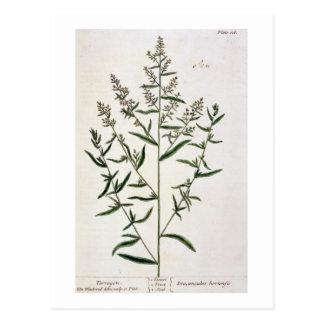 """El estragón, platea 116 """"de un herbario curioso"""", tarjetas postales"""
