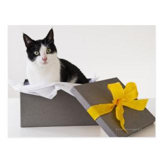 El estudio tiró de gato blanco y negro en caja de postal
