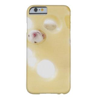 El estudio tiró del ratón blanco que miraba a funda de iPhone 6 barely there