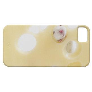 El estudio tiró del ratón blanco que miraba a trav iPhone 5 cobertura