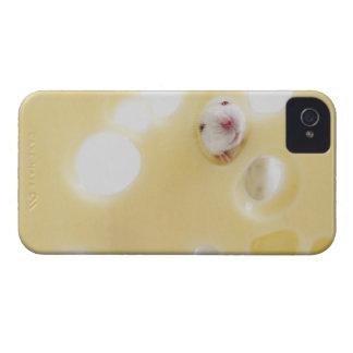 El estudio tiró del ratón blanco que miraba a trav iPhone 4 Case-Mate carcasa