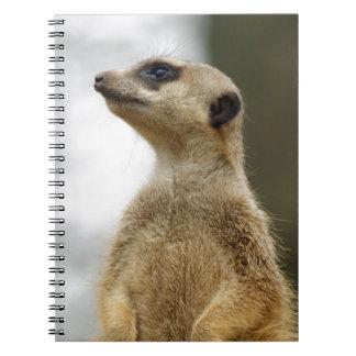 El explorador Meerkat lindo