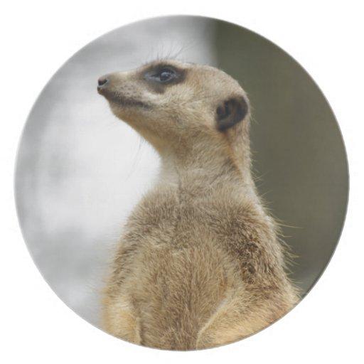 El explorador, Meerkat lindo Platos De Comidas