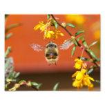 El felices manosean la abeja fotografias