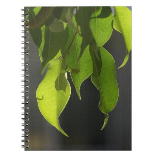 El Ficus fabuloso sale del cuaderno