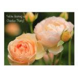 El fiesta inglés precioso de los capullos de rosa  postal