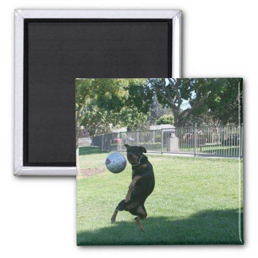 El fisgón el perro tiene movimientos imán cuadrado
