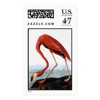 El flamenco de Audubon Timbre Postal