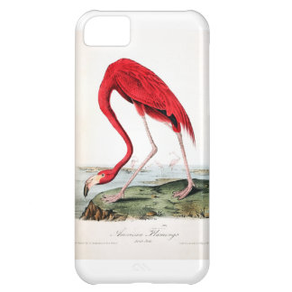 El flamenco rojo de Audubon