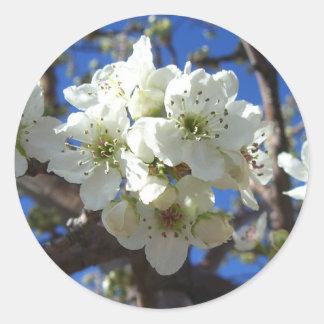 El flor blanco agrupa el peral floreciente de la pegatina redonda