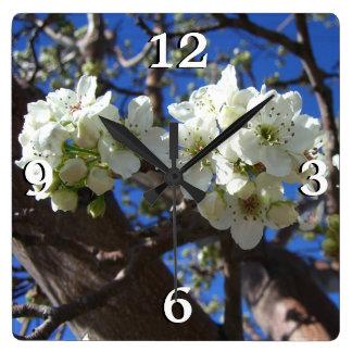 El flor blanco agrupa el peral floreciente de la reloj cuadrado