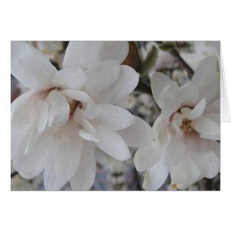 El flor blanco de Pascua florece la tarjeta