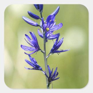 El flor de un lirio de Camas en el condado de Calcomanía Cuadradas Personalizadas