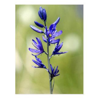 El flor de un lirio de Camas en el condado de Vall Postales