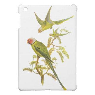 El flor dirigió el Parakeet