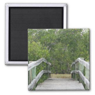 El fondo verde del mangle atraca llevar adentro iman de frigorífico