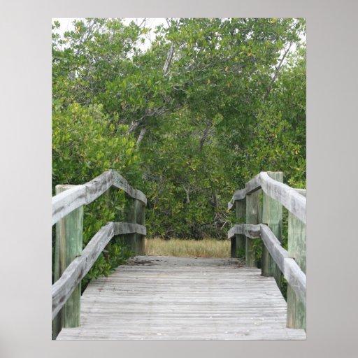 El fondo verde del mangle, atraca llevar adentro impresiones