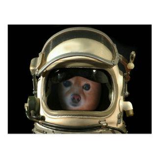El Fox es astronauta #3 Tarjetas Postales