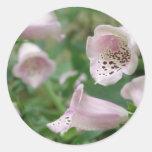 El Foxglove florece a los pegatinas Pegatina Redonda
