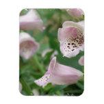 El Foxglove florece el imán superior