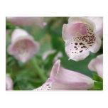 El Foxglove florece la postal