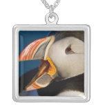 El frailecillo atlántico, un ave marina pelágica, colgante cuadrado