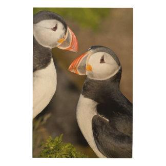 El frailecillo atlántico, un ave marina pelágica,  cuadros de madera