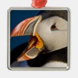 El frailecillo atlántico, un ave marina pelágica,  ornamento para arbol de navidad