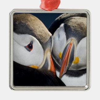 El frailecillo atlántico un ave marina pelágica ornamentos de navidad
