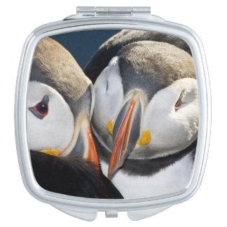 El frailecillo atlántico, un ave marina pelágica,  espejos maquillaje