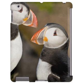 El frailecillo atlántico, un ave marina pelágica,  funda para iPad