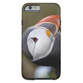 El frailecillo atlántico, un ave marina pelágica, funda para iPhone 6 tough