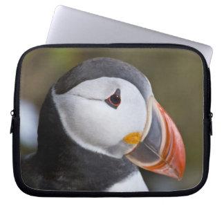 El frailecillo atlántico, un ave marina pelágica,  manga computadora