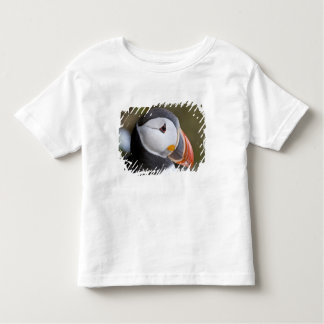 El frailecillo atlántico, un ave marina pelágica, playera de bebé