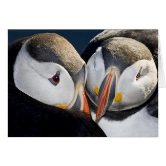 El frailecillo atlántico, un ave marina pelágica,  tarjeta de felicitación