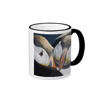 El frailecillo atlántico, un ave marina pelágica,  taza de café