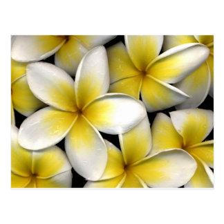 el frangipani blanco y amarillo florece con las ho tarjeta postal