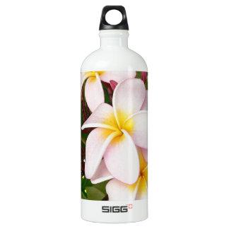 El Frangipani hawaiano de la hawaiana florece