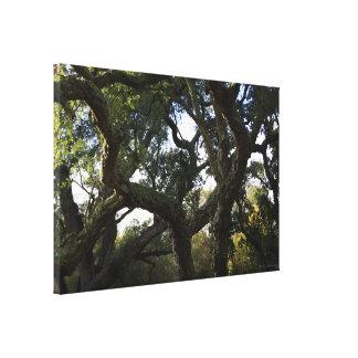 El frondoso alcornoque o árbol del corcho en monte impresion en lona
