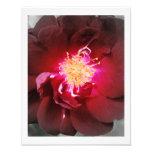 El fuego interno - fotografía del rosa rojo
