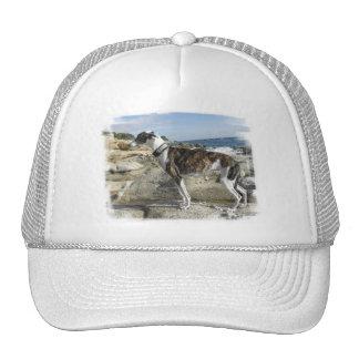 El galgo fotografía el gorra de béisbol