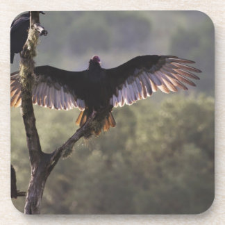 El gallinero cerca de permeable, Tejas de los halc Posavasos De Bebida